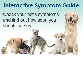Pet Symptom Guide